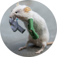 Anthropomorphic Mouse Taxidermy (Evening Session)