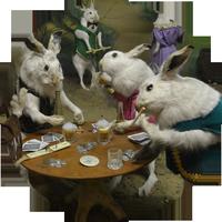 Rabbit Taxidermy