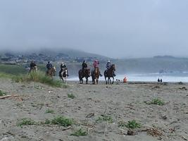 Doran Beach and Bird Walk Horse Trail Ride
