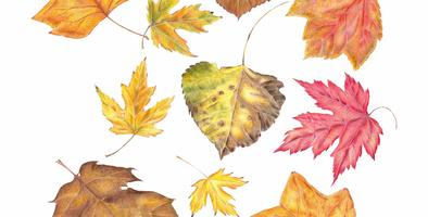 Drawing Autumn Leaves