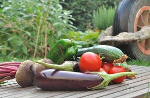 Health Innovation Grants Promoting Health Food Access W...