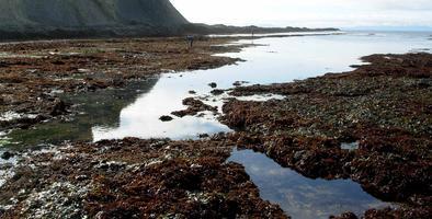 Minus Tide at Duxbury Reef