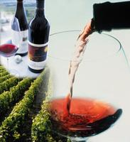 South of the Border Wine Tour: Wines of Chile &...