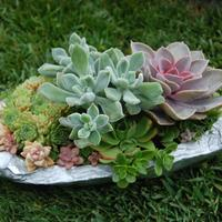 Succulents in Containers (Tuesday, April 8, 11:00am)