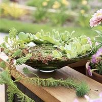 Tabletop Water Gardens (Tuesday, April 22, 11:00am)