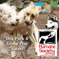 Dog Park & Group Play Safety (HSEP)