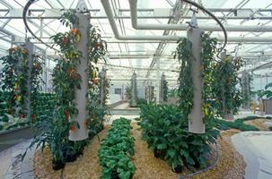 Getting Started with Hydroponics