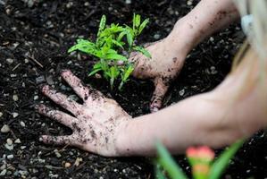 Shabbat: Creating a Havdalah Container Garden