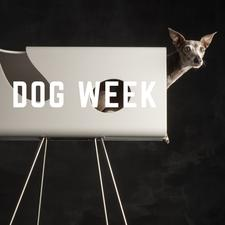 DOG WEEK - by sighthound coach logo