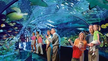 Ripley's Aquarium Tour + Behind The Scene Tour