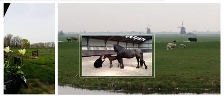 """Workshop """"Foal Imprinting"""""""