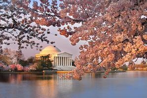 MAD Cherry Blossom River Cruise 2014!