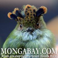 Mongabay Fundraiser