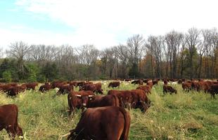 Pasture Walk: Healthy Soils, Healthy Livestock - Save...