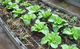 Beginner Gardening Workshop