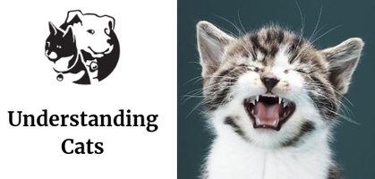 3133171322a34f Understanding Cats Tickets, Thu, Aug 15, 2019 at 6:00 PM | Eventbrite