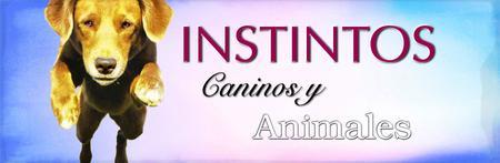 CURSO Instintos Caninos y Animales ONLINE