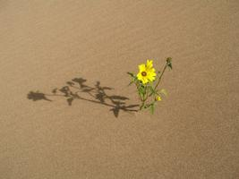 Flourishing in Adversity: A Lamp in the Darkness