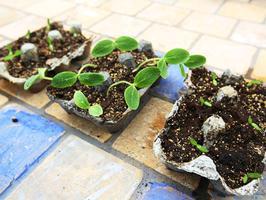 Get Growing! Gardening Lab - July 2019