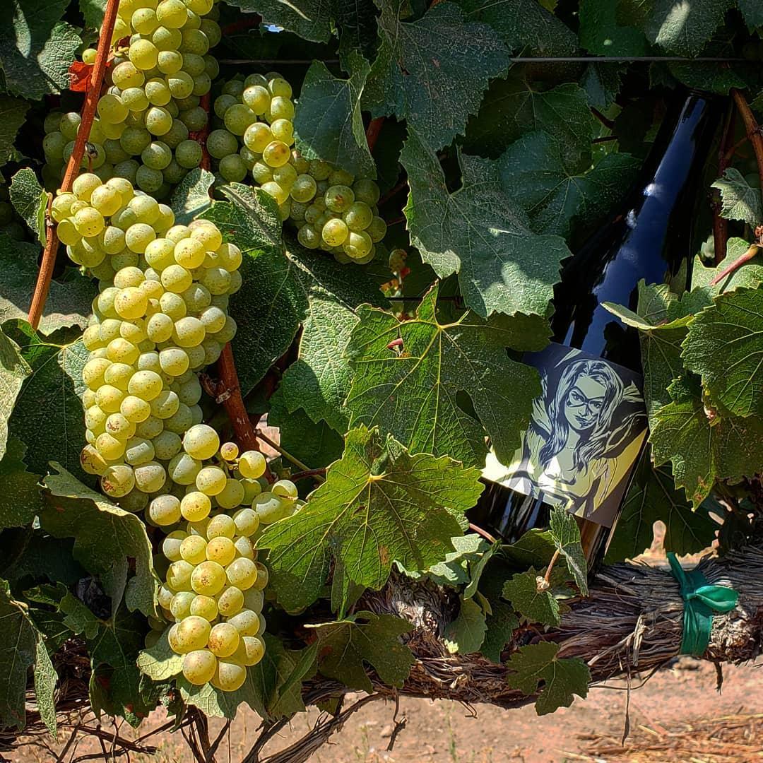 Iconic Wines Tasting Event