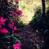 Ravine Gardens Nature Hike
