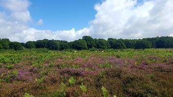 Habitat Condition Survey Training Day - Heathland