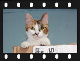 2014 Internet Cat Video Festival in New Orleans