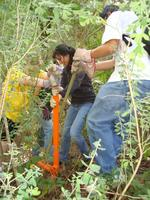 Stulsaft Park Volunteer Workday - Saturday, June 21,...