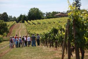 Red Ridge Farms Vineyard Walking Tours & Gourmet Lunch...