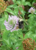 Healing Hedgerows for Humans and Bees: Seasonal wild...