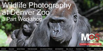 Wildlife Photography at Mike's Camera & Denver Zoo-...