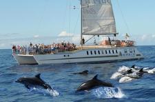 Gran Canaria Dolphin Boat Trips logo