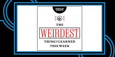Popular Science Presents: The Weirdest Thing I Learned...