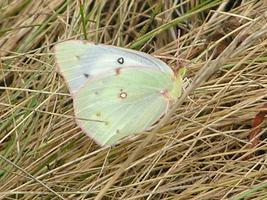 Butterflies and Skippers: Tracking Nature's Clock
