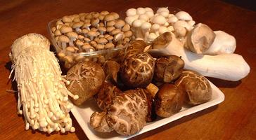 Medicinal Mushrooms as a Dietary Solution