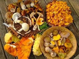 Foodie Quine presents Guided Fungi Forage with Mark...