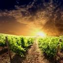Groesbeek - Jazz en Wijnfestival - Wijnproeverij (via...