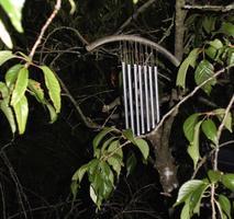 Nature Sounding - Musikschamane