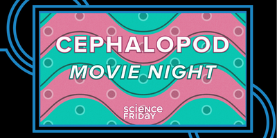 Cephalopod Movie Night with Science Friday!