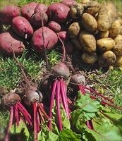 Sonoma Culinary  Retreat