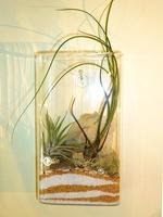 """Air Plant on Sand"" Terrarium  / Utsuwa Floral Design"