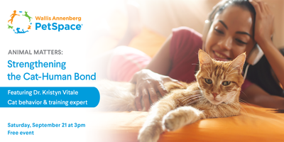 2ffa742ecd91d3 Animal Matters: Strengthening the Cat-Human Bond Tickets, Sat, Sep 21, 2019  at 3:00 PM | Eventbrite