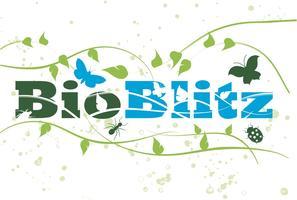 Cambridge BioBlitz: Garden walk