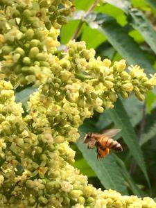 Northern Natural Beekeeping Conference Tickets, Fri, Oct 4