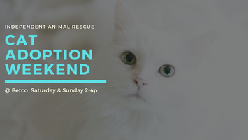 21122f80122a46 Independent Animal Rescue Cat Adoption Weekend @ Petco South Square  Tickets, Multiple Dates | Eventbrite
