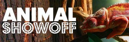 Animal Showoff