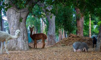 Twilight Dinner on the Farm