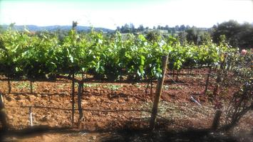 Winemaking from Grapes | Advanced Winemaking Course Grape...