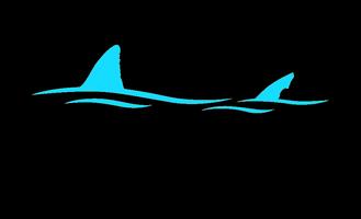 Shark Camp Summer Enrollment