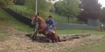 Corso per Tecnico di 1° Livello di Equitazione...